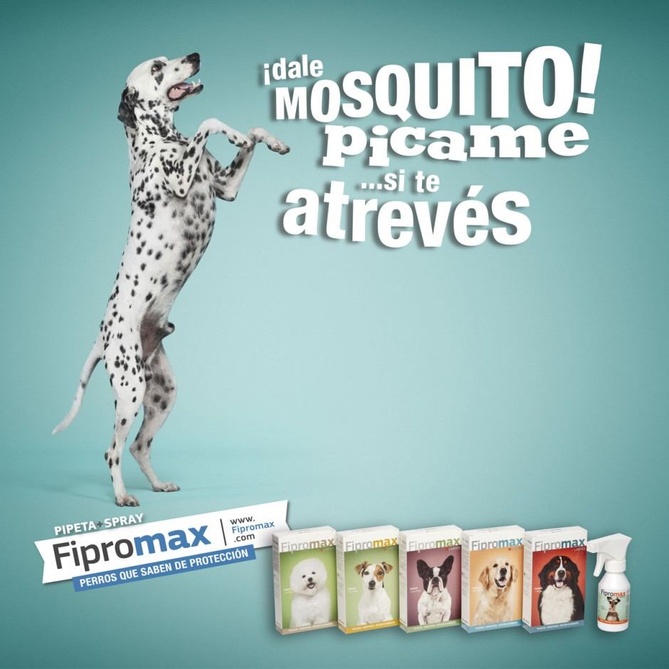 animals 04 - fipromax labyes