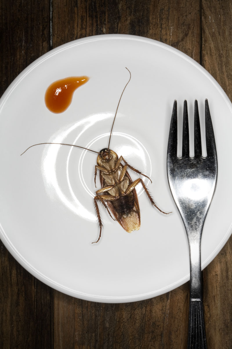personal - insects 04